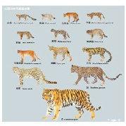 猫盟CFCA微博照片