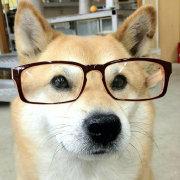 柴犬柴犬微博照片