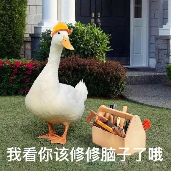鸭儿表情包