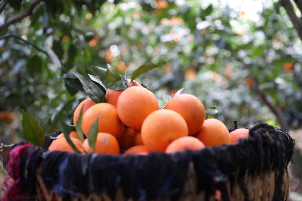 装在篮子里的水果图片 大自然与水果真是绝配啊