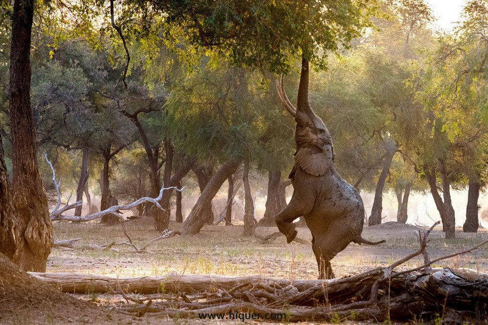 14张《超有戏的动物明星照》,骚气程度使你怀疑是不是人类假装的! 趣事儿 第8张