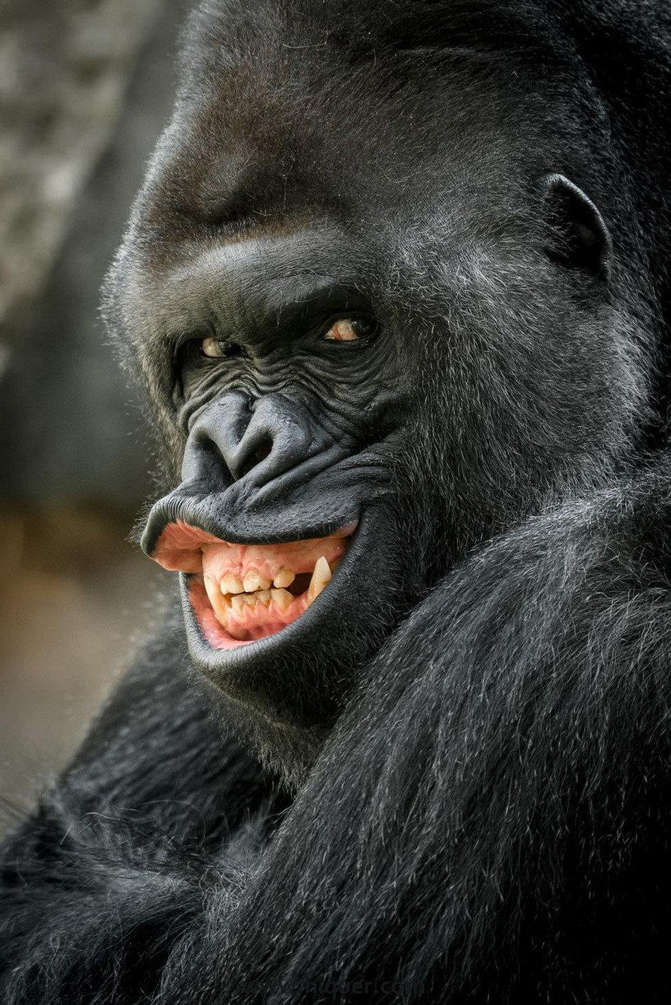 14张《超有戏的动物明星照》,骚气程度使你怀疑是不是人类假装的! 趣事儿 第11张