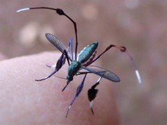 得此驱蚊配方,让你脖子上的红包不再是蚊子给的!
