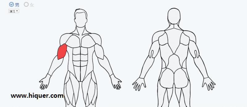 一个实用的健身网站 (musclewiki):选择身体的某块肌肉,自动跳出针对这块肌肉的锻炼视频 福利吧 第1张
