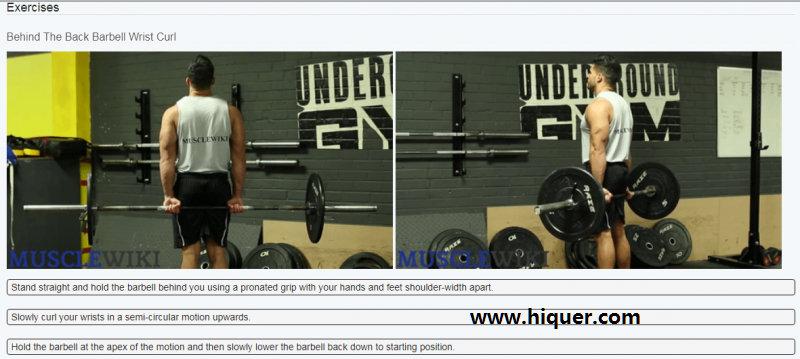 一个实用的健身网站 (musclewiki):选择身体的某块肌肉,自动跳出针对这块肌肉的锻炼视频 福利吧 第2张