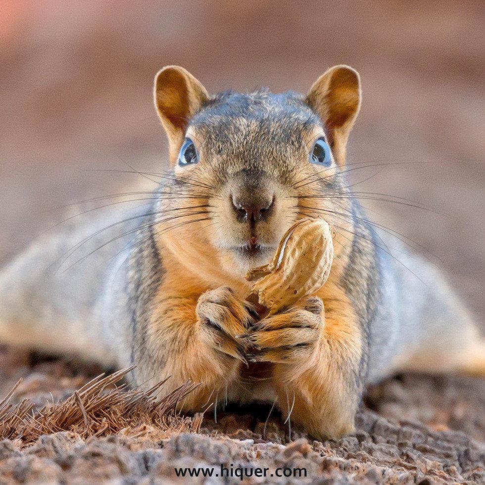 14张《超有戏的动物明星照》,骚气程度使你怀疑是不是人类假装的! 趣事儿 第1张