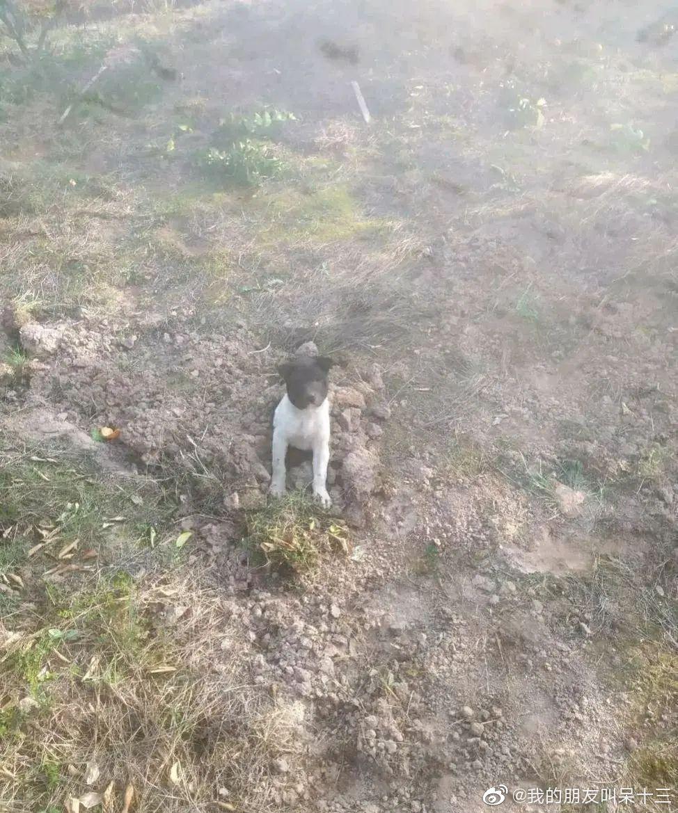 我好心把一条野外流浪狗的尸体给埋了,...