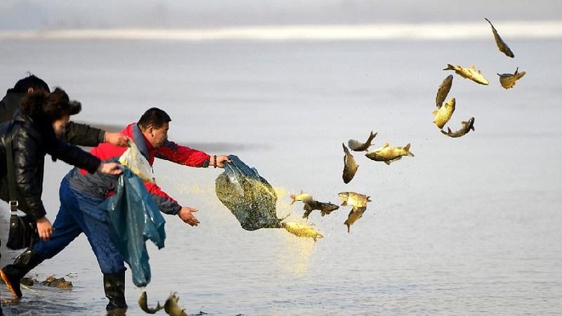 野生保护条例拟规定:放生水生动物须备案