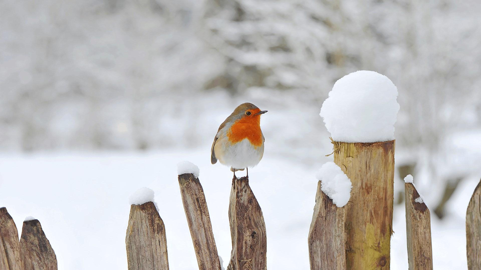 寒冷的早晨:Win10迎来初冬美景免费主题