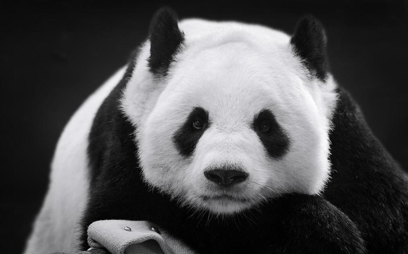 """Win10""""大熊猫""""免费主题发布的照片 - 4"""