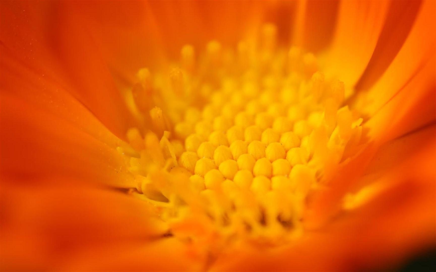 """百花竞放:Win10""""Flower Petals""""4k免费主题发布的照片 - 3"""