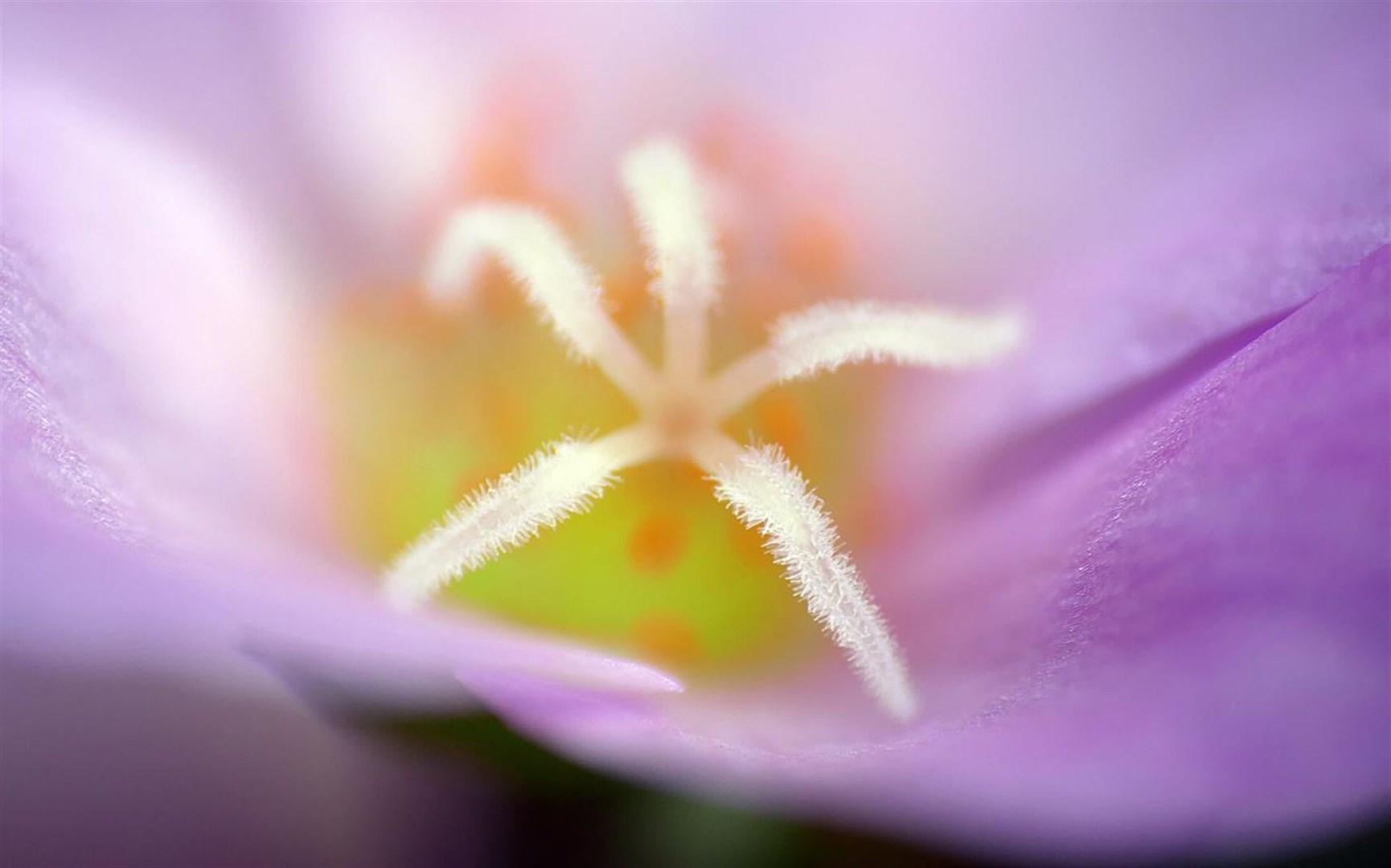 """百花竞放:Win10""""Flower Petals""""4k免费主题发布的照片 - 4"""