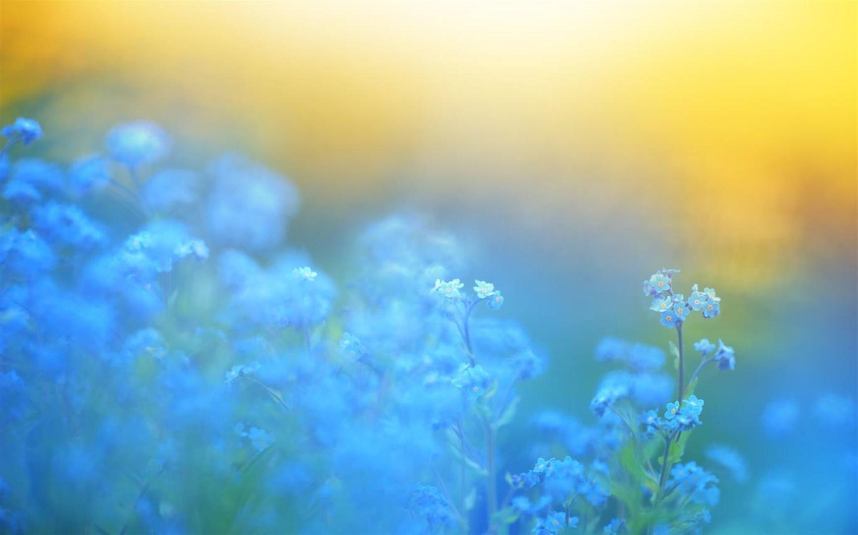 """百花竞放:Win10""""Flower Petals""""4k免费主题发布的照片 - 5"""