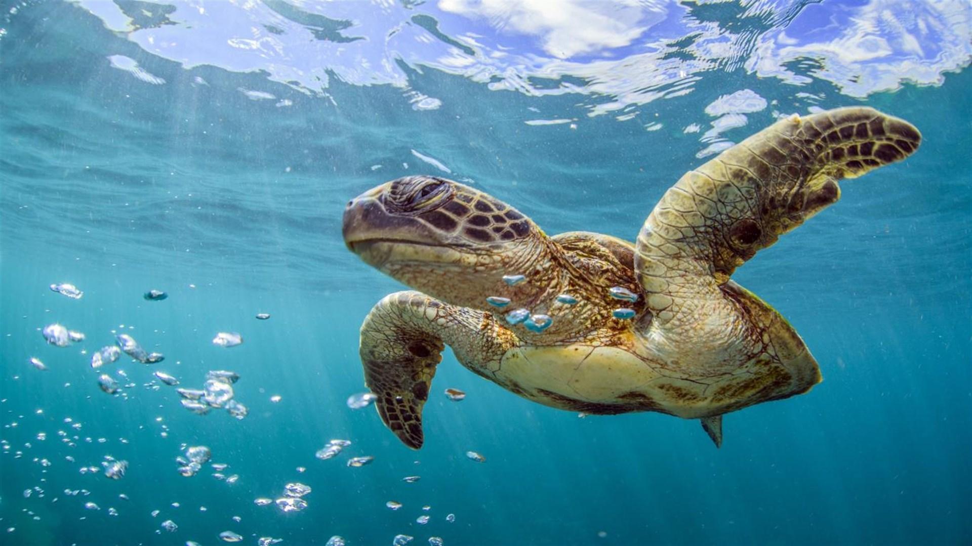 """Win10""""世界海洋日""""4k免费主题发布的照片 - 3"""