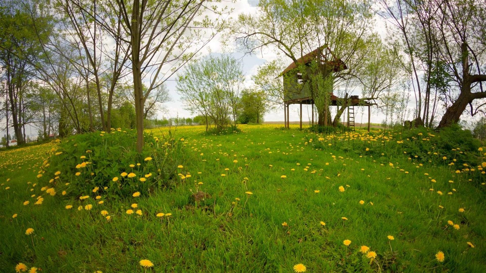 """美丽的树屋,Win10""""Treehouses PREMIUM""""4k免费主题的照片 - 3"""