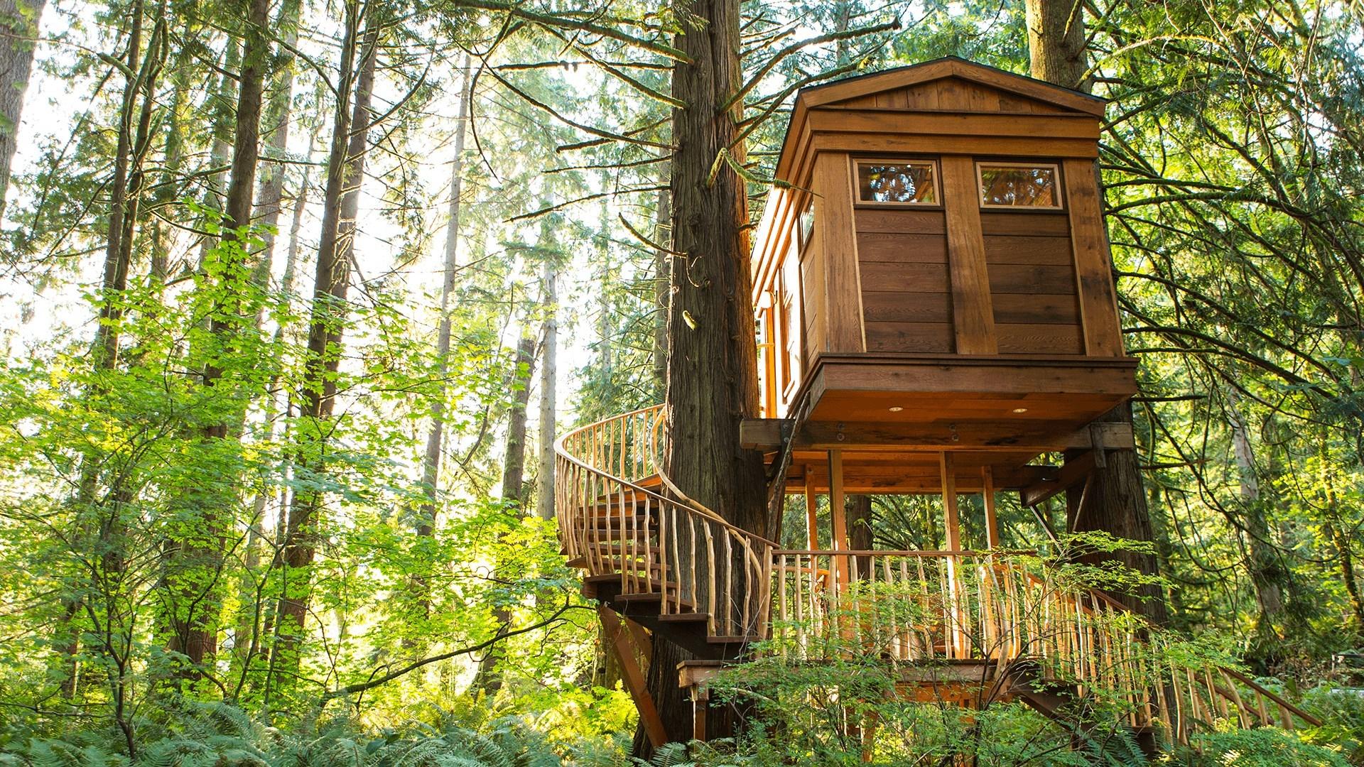 """美丽的树屋,Win10""""Treehouses PREMIUM""""4k免费主题的照片 - 5"""