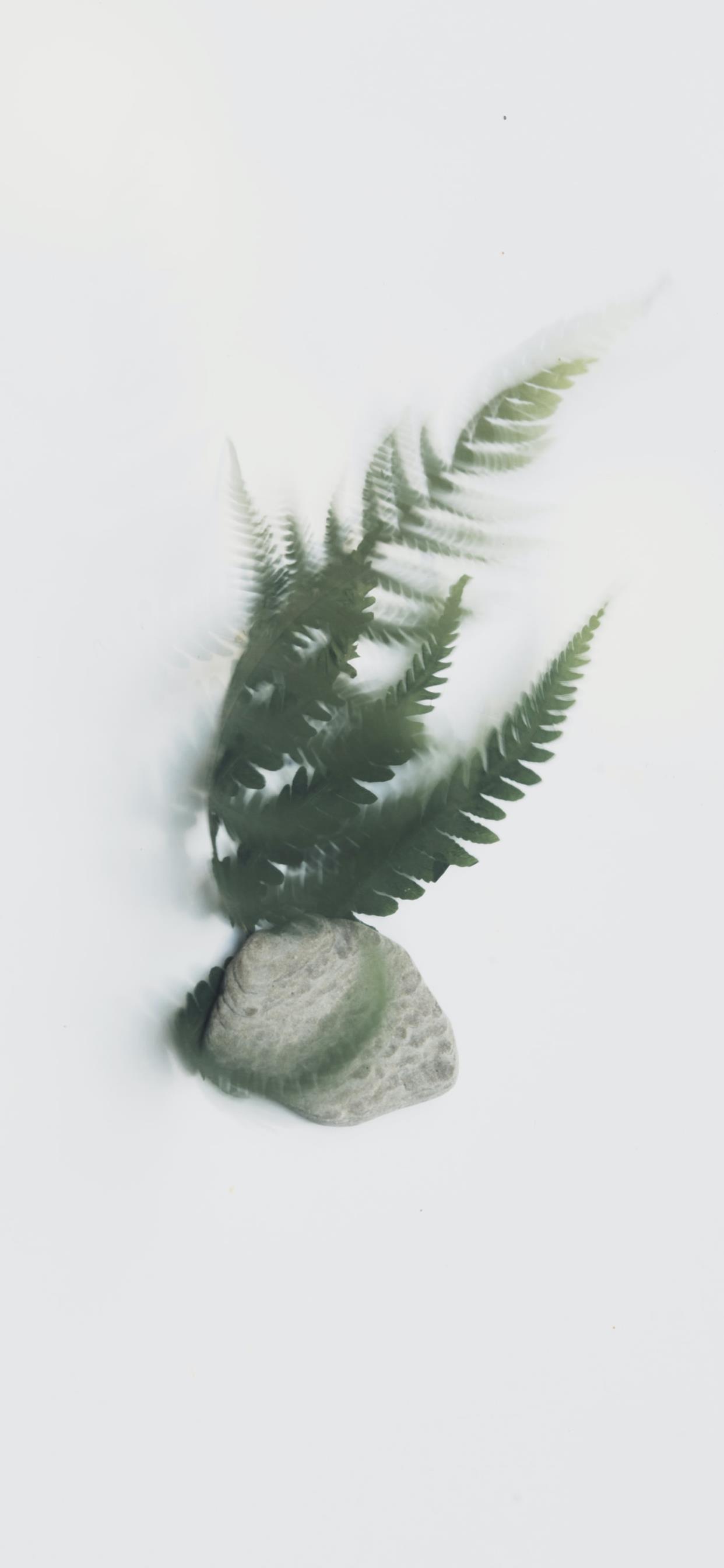 小清新植物高清手机壁纸