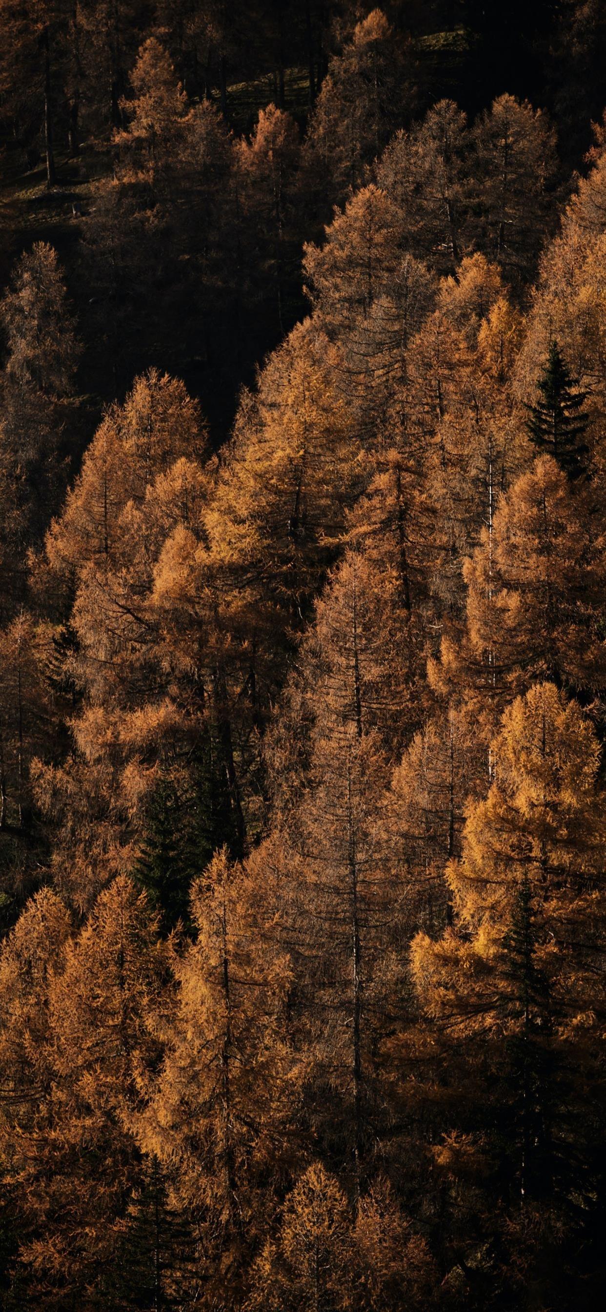 秋意盎然风景图片手机壁纸
