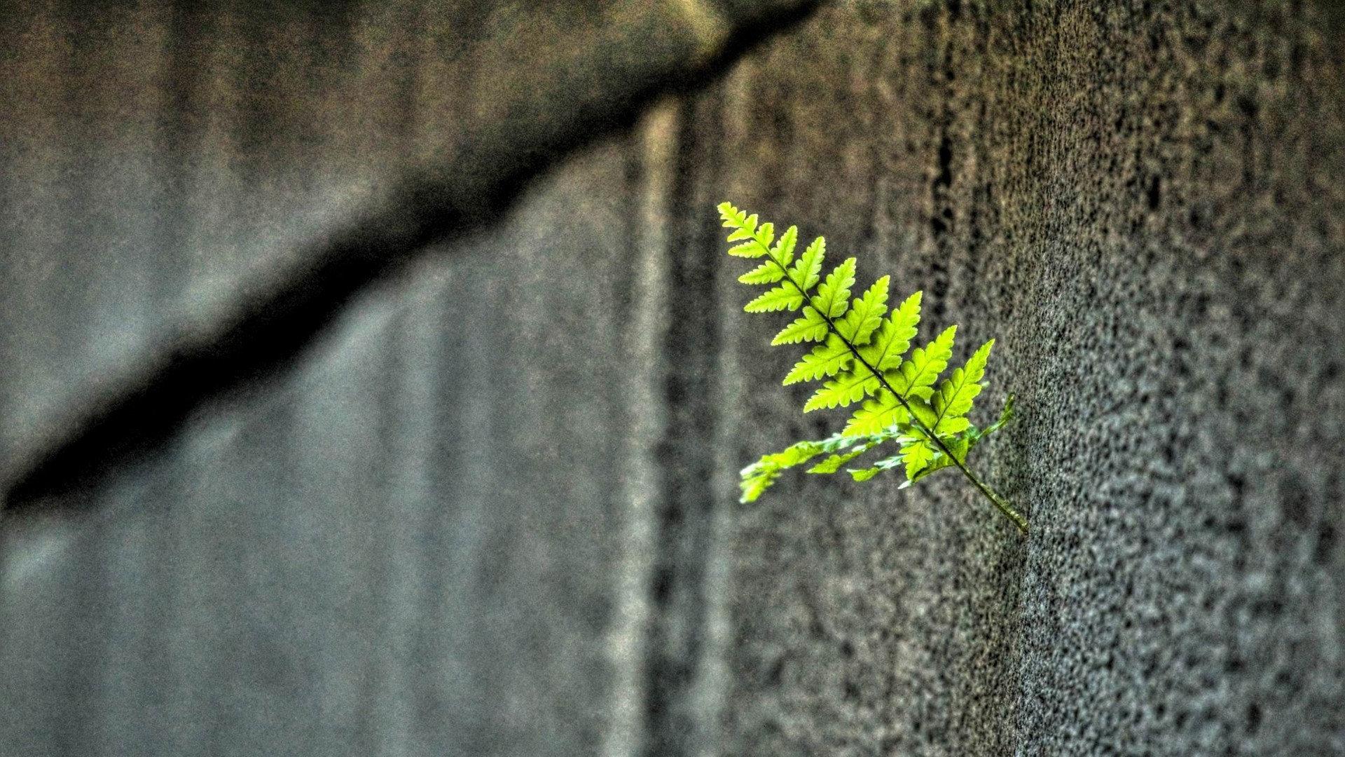清新绿色护眼高清桌面壁纸
