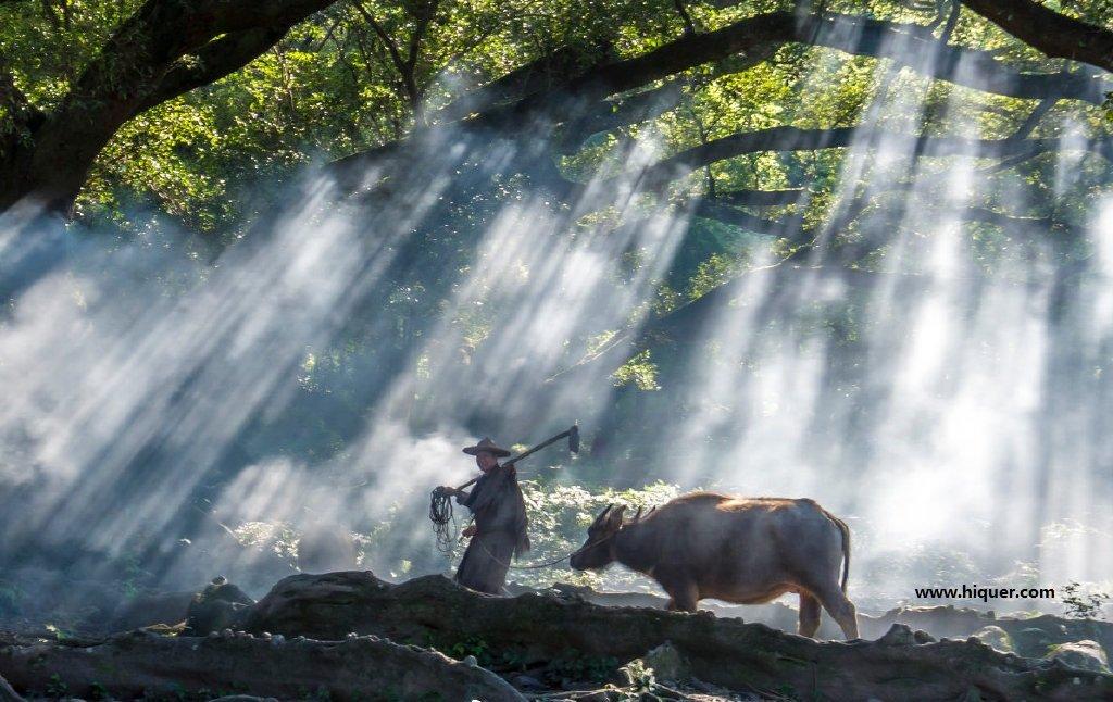 网红老农牵牛的美景地,你没有考虑过牛的感受?无底线! 嗨头条 第1张