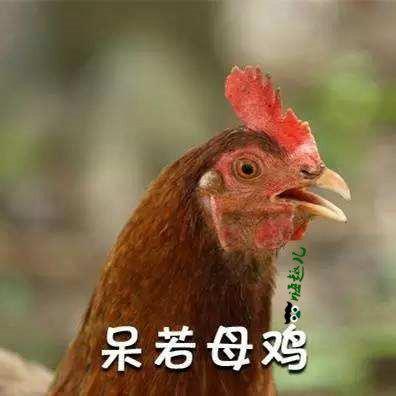 """""""安静如鸡""""什么意思?最早出自哪里?"""