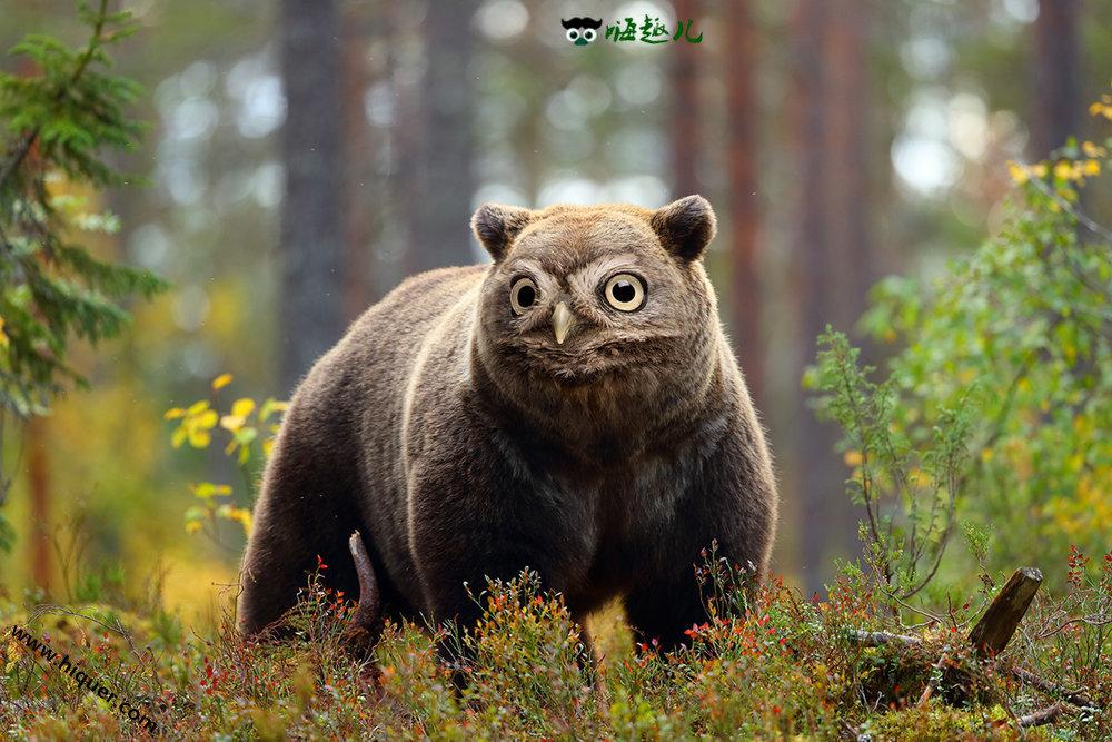 【杂交动物】P图大师创造出的15种奇葩生物 看起来毫无违和感 趣事儿 第1张