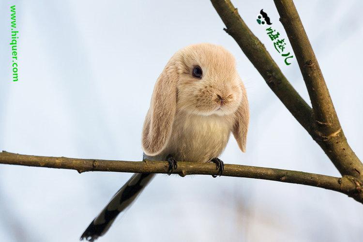 【杂交动物】P图大师创造出的15种奇葩生物 看起来毫无违和感 趣事儿 第4张