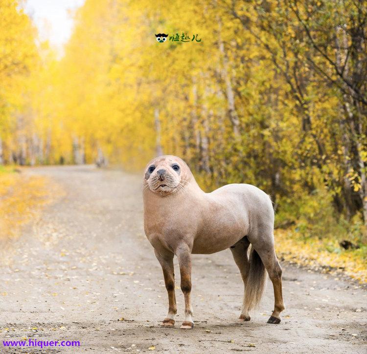 【杂交动物】P图大师创造出的15种奇葩生物 看起来毫无违和感 趣事儿 第5张
