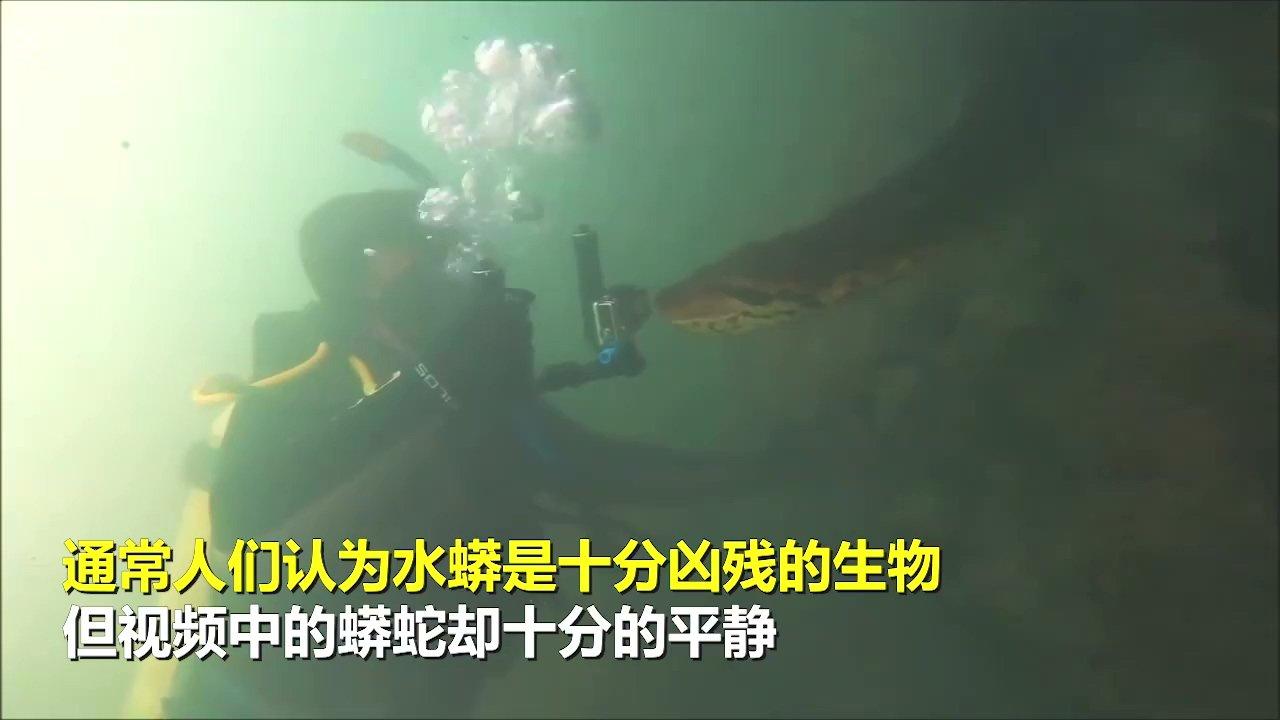 国外摄影师超近距离拍摄巨型水蟒 胆小慎点! 涨姿势 第2张