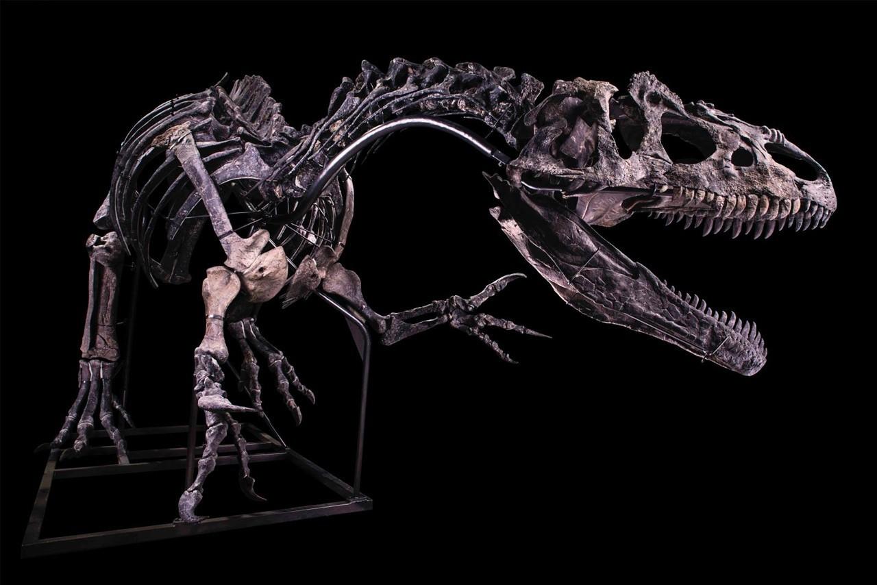 修复后的异龙骨架估计售价超过100万美元