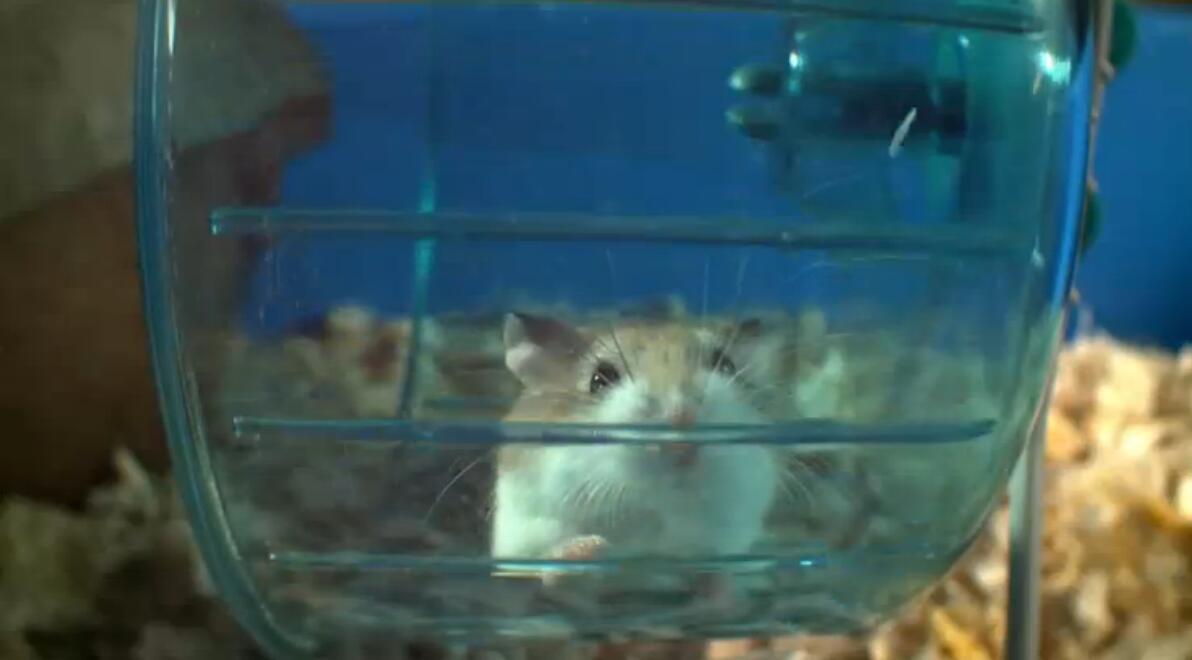 動物世界親子紀錄片:bbc-寵物的天性 Pets – Wild at Heart (2015) 全2集 外掛中英字幕圖片 No.1