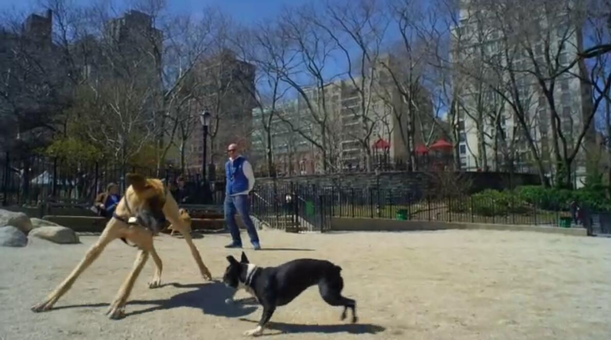 動物世界親子紀錄片:bbc-寵物的天性 Pets – Wild at Heart (2015) 全2集 外掛中英字幕圖片 No.4