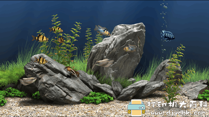 [Windows]超酷海洋馆屏保 Dream Aquarium Screensaver 1.293 注册版图片
