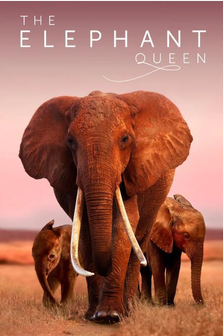 一個關于母愛的動物世界紀錄片:大象女王 The Elephant Queen (2018) 全1集 高清圖片
