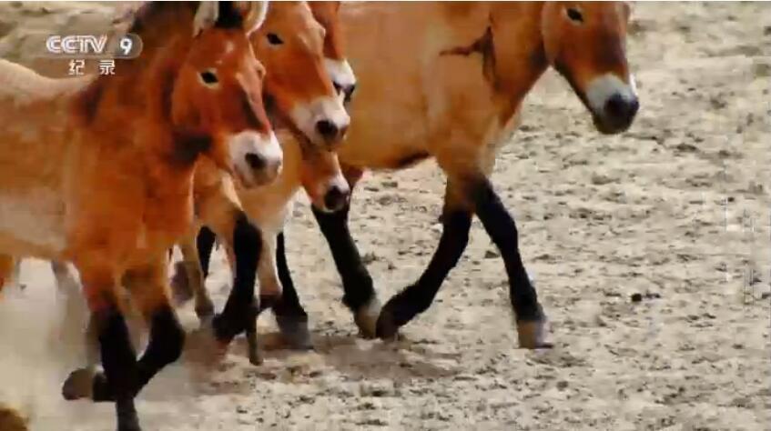 [国语中字]中国首部全景式野生动物纪录片-央视 《野性的呼唤》全5集 高清1080P图片 No.3
