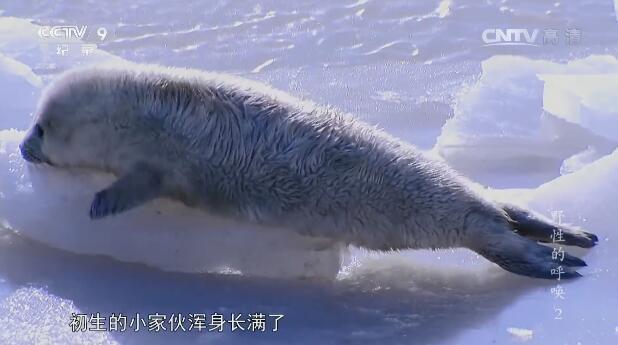 [国语中字]中国首部全景式野生动物纪录片-央视 《野性的呼唤》全5集 高清1080P图片 No.1