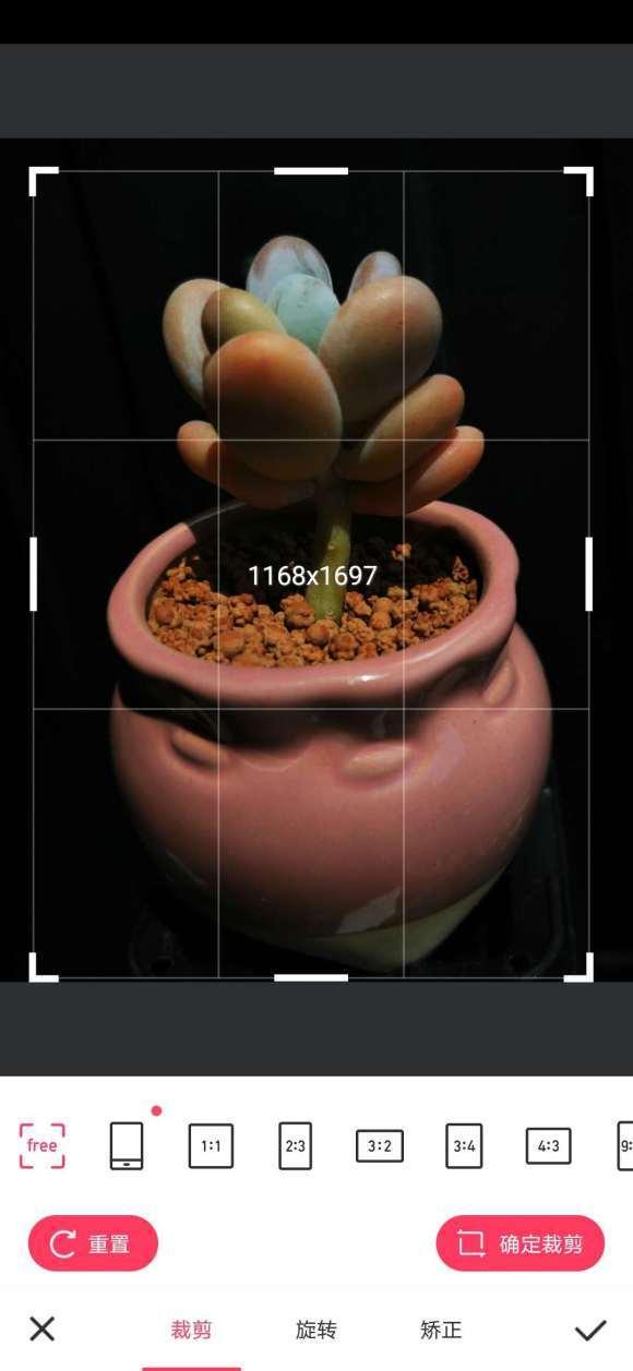 【教程帖】如何用手机拍摄出纯黑背景的多肉美图图片 No.8
