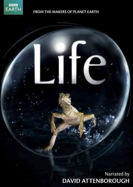 【国语中字】豆瓣高分纪录片top250第12:央视译制 bbc作品《生命 Life 》(2009) 全10集 高清图片
