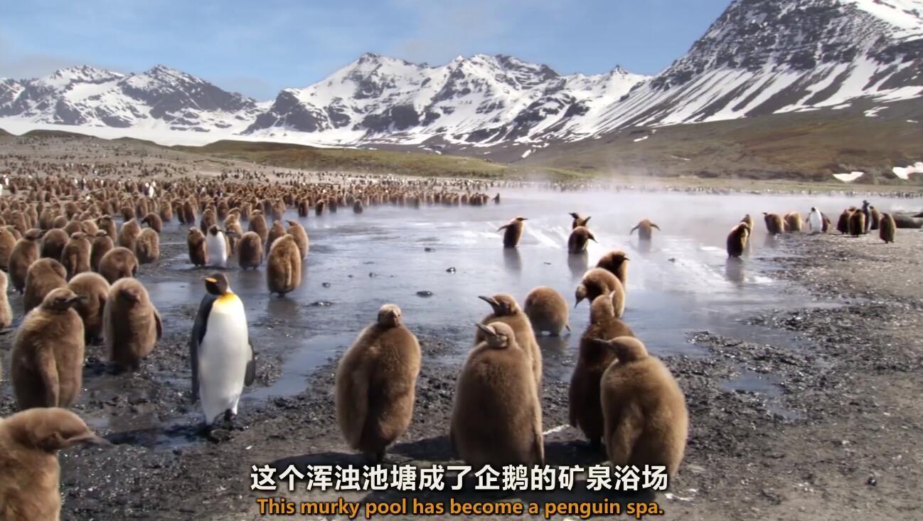 【英语中英字幕】动物世界纪录片:极地之夏 Summer 全1集 超清1080P图片 No.3