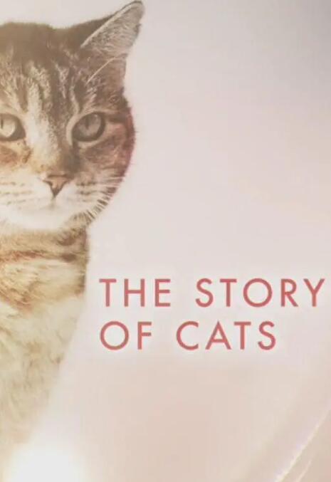 【英语中英字幕】豆瓣9.0分猫纪录片:猫科动物的故事 The Story of Cats (2016) 全3集 高清720P图片