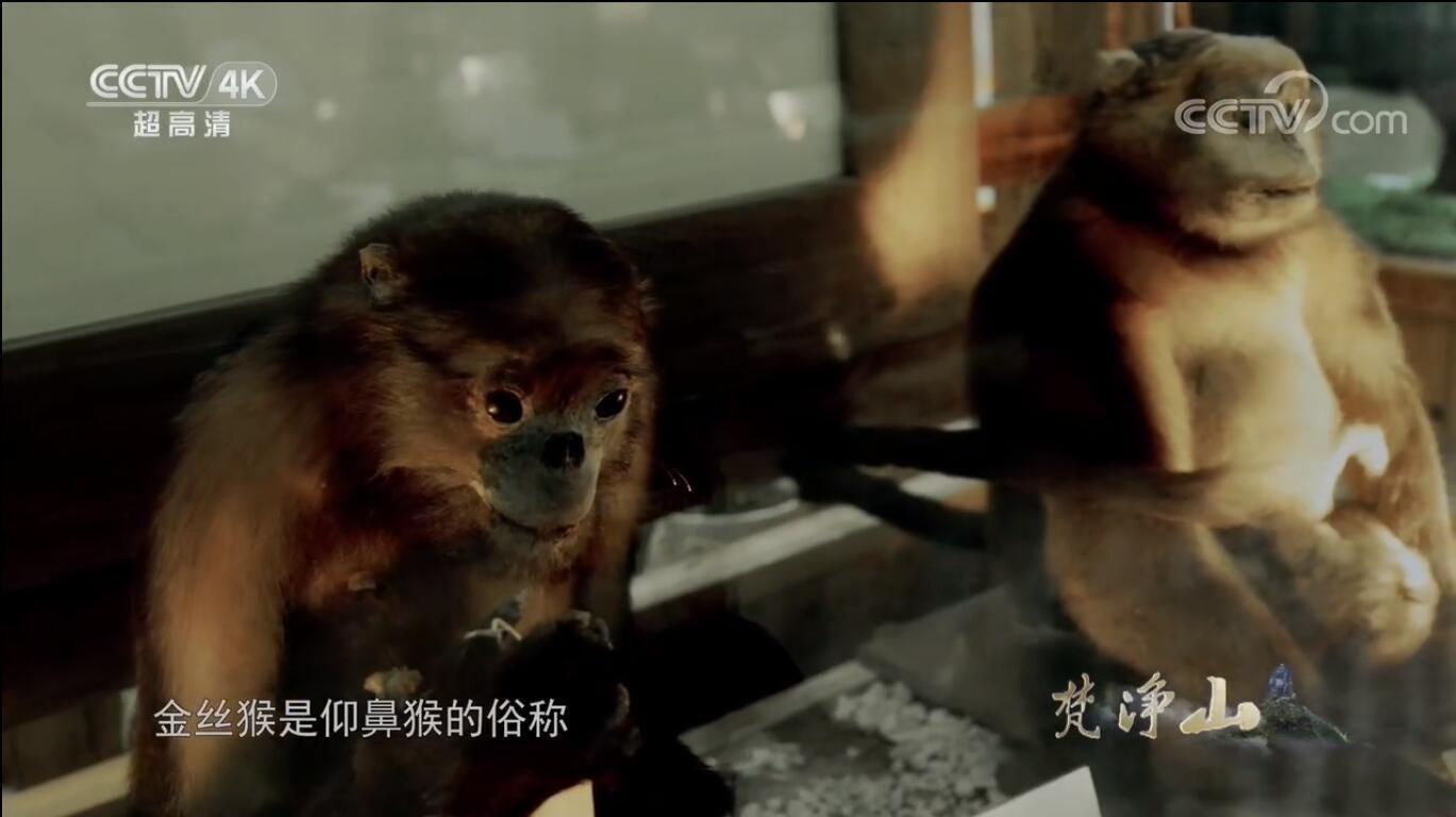 【国语中字】央视纪录片:梵净山(2019)全2集 高清720P图片 No.3