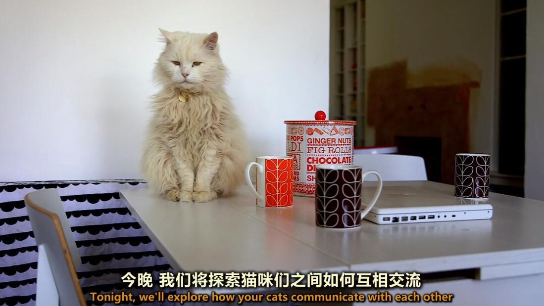 【英语中英字幕】猫奴必看,动物世界纪录片:《喵言猫语》 全1集 高清720P图片 No.1