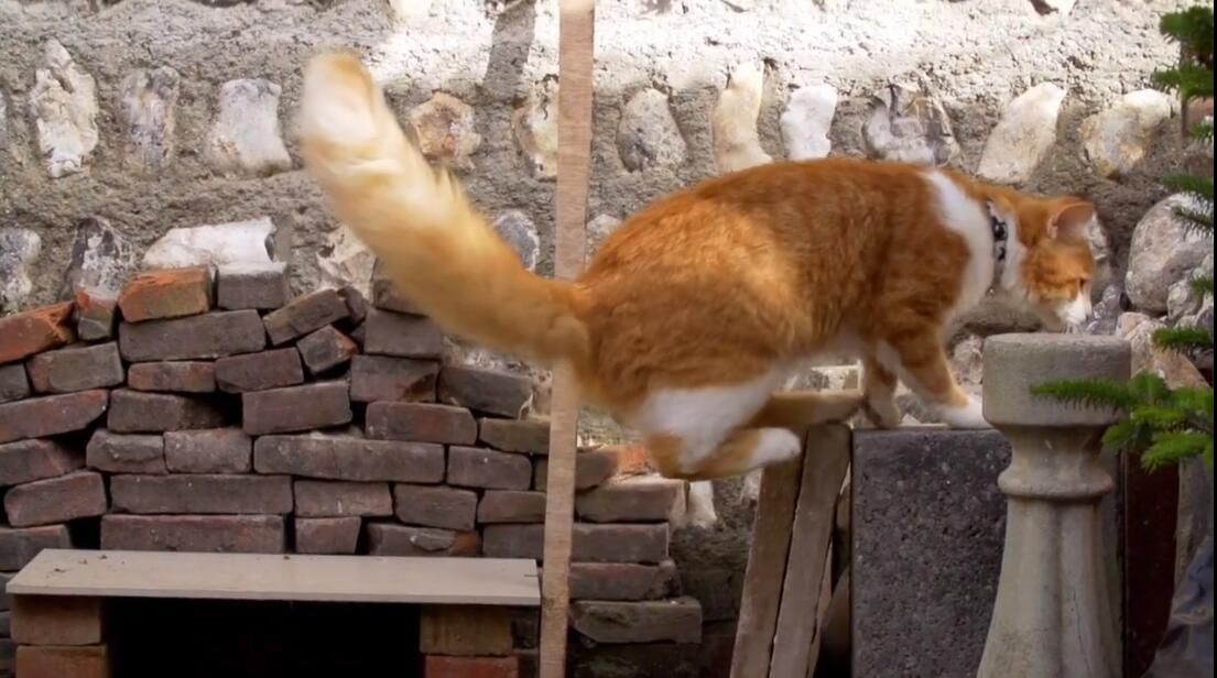 【英语中英字幕】猫奴必看,动物世界纪录片:《喵言猫语》 全1集 高清720P图片 No.2