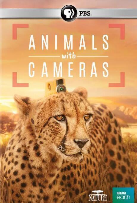 【英语中英字幕】bbc纪录片:假如动物会摄影(动物摄影师) Animals with Cameras 全3集合辑版 高清1080P图片