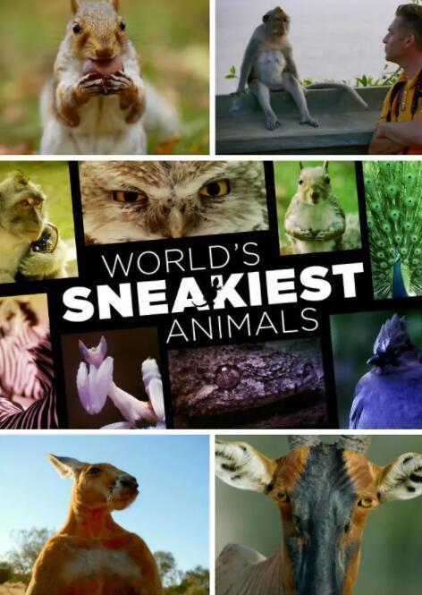 【英语中字】BBC动物世界纪录片:世界上最狡猾的动物 World's Sneakiest Animals (2015) 全3集 超清1080P图片