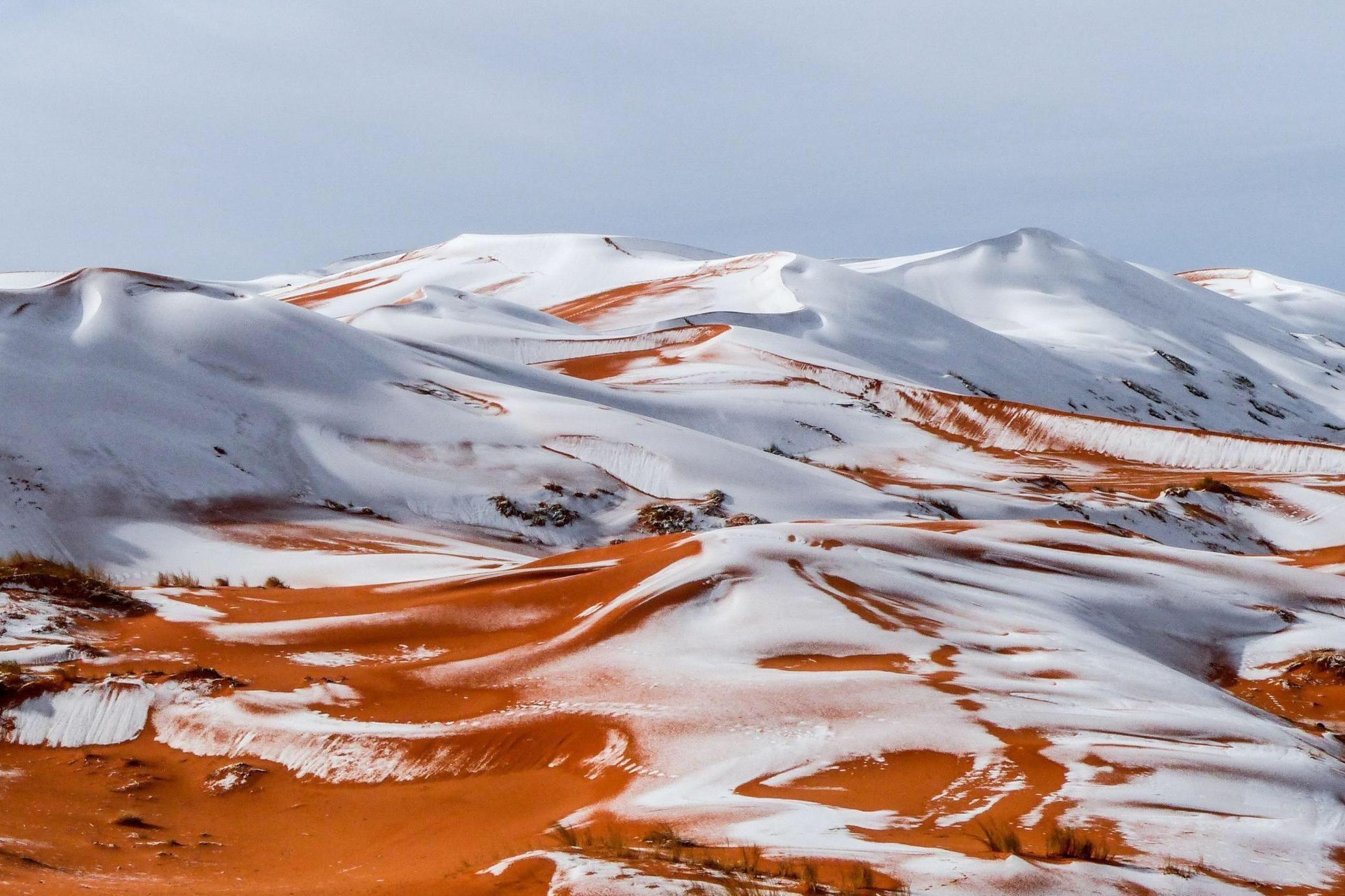 撒哈拉沙漠的雪