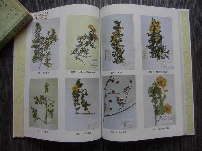 《中国植物志》中关于「辣木」的记载