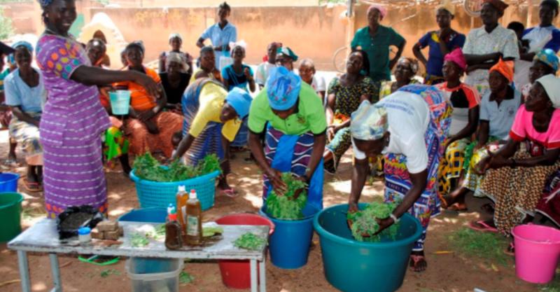 奇迹之树「辣木」帮助尼日尔度过粮食危机 国外辣木