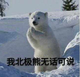 我北极熊无话可说