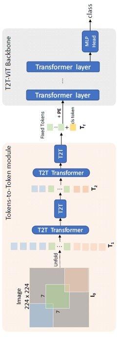 图5:T2T-ViT 架构